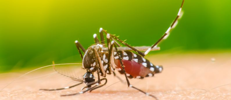 mosquito control in Hilliard